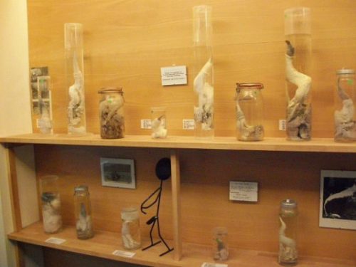 The World's Largest Collection of Penises (282 Specimens)