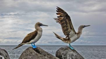 galapagos animals