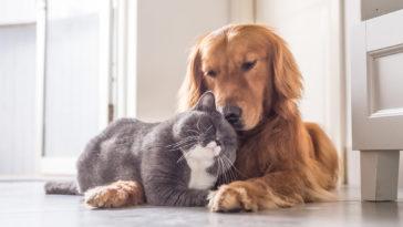 pet friendly homes