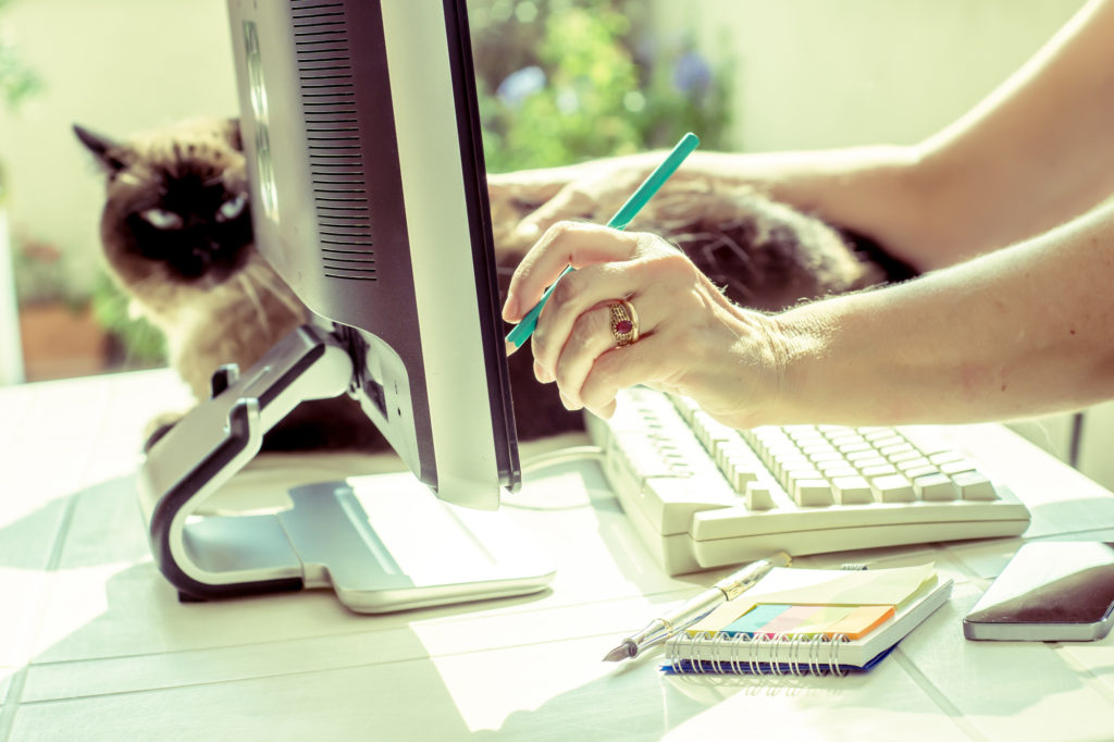 seo freelancer