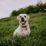Benefits of Crate Training Your Dog