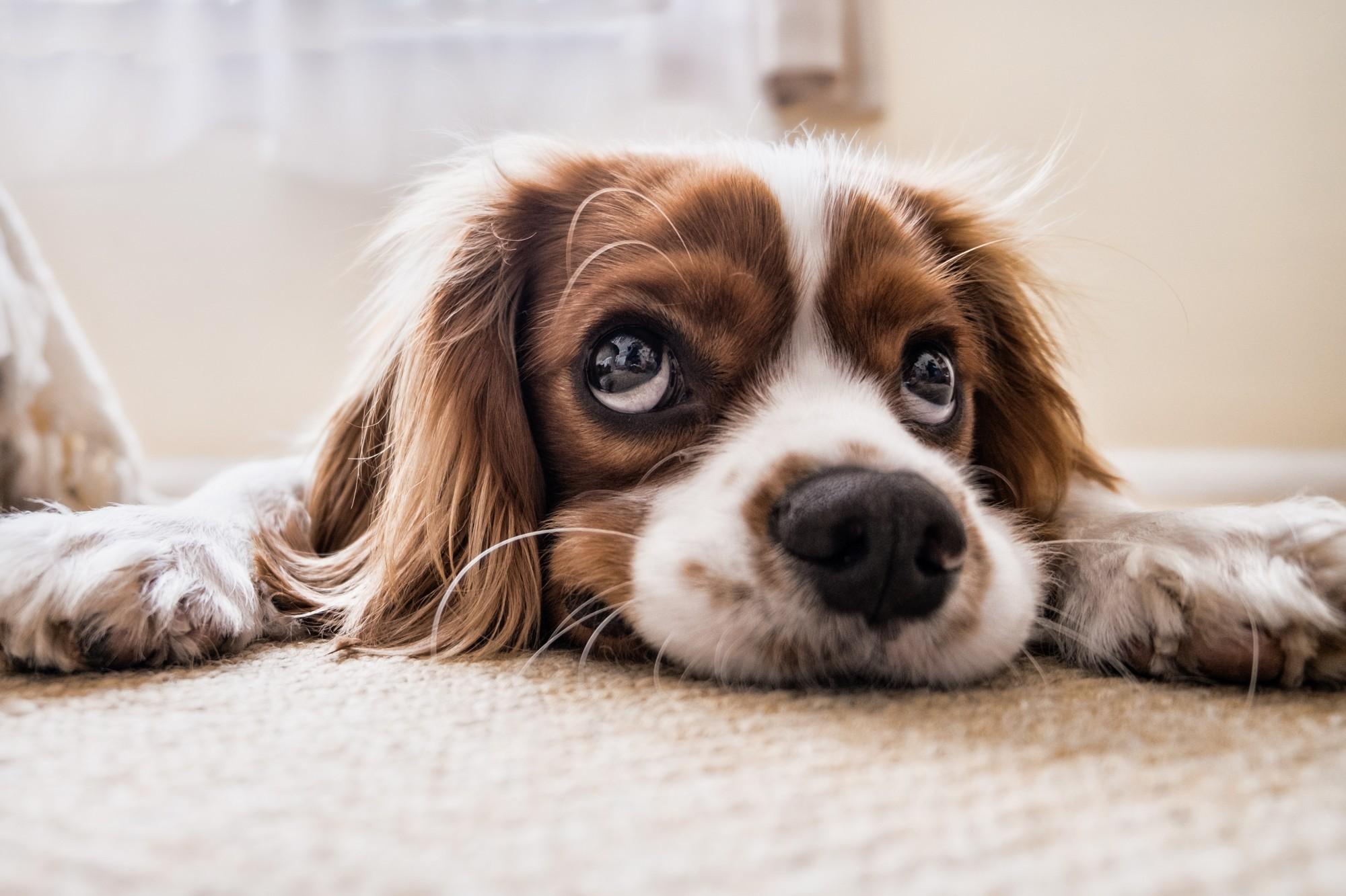 puppy on floor looking up