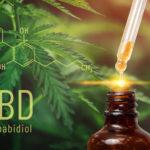 cbd oil and hemp leaves