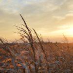 field in midwest