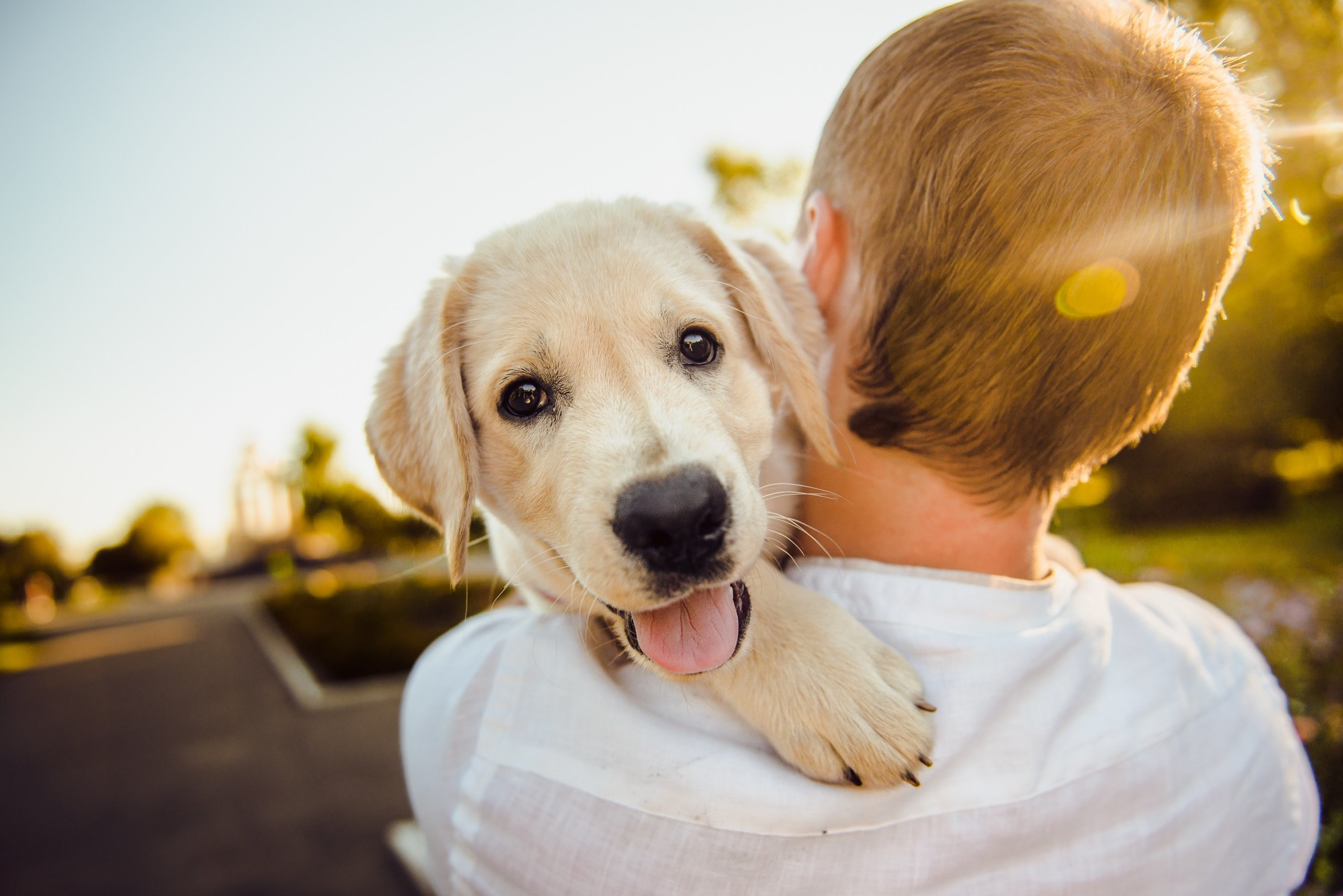 happy dog and owner